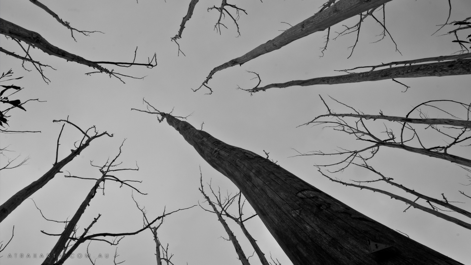 Trees, Alpine National Park, Viking Saddle